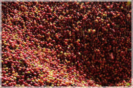 Kolumbia Finca Los Alpes Red Honey